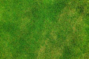 דשא סינטטי ראשית